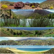 http://www.aula21.net/cazas/cazasaula21/ecosistemas.html